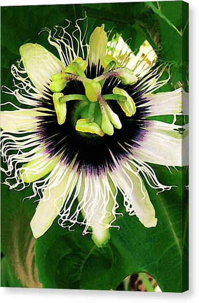Lilikoi Flower Canvas Print by James Temple