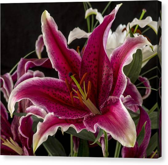 Mcherdering Canvas Print - Lilium by Mike Herdering
