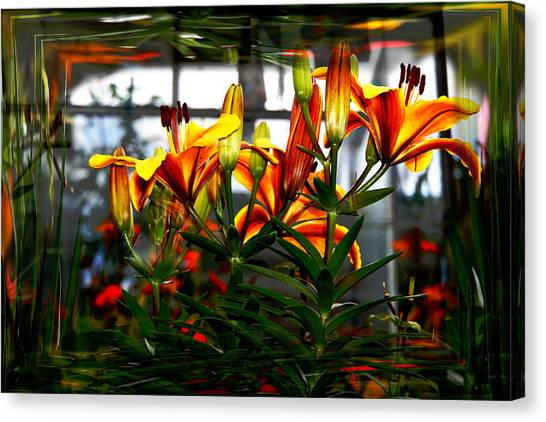 Lilium Canvas Print by Nigel Watts