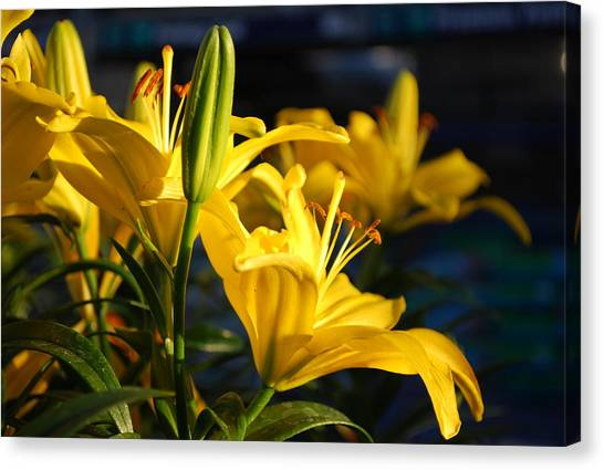 Lillies Of Gold Canvas Print by Billie Colson
