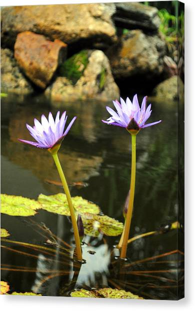 Lillies Of The Pond Canvas Print