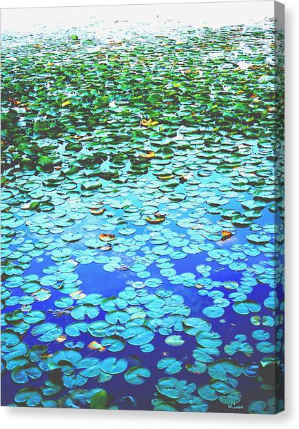 Lilly Pads Canvas Print