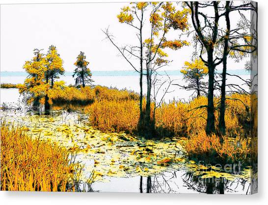 Great Cypress Canvas Print - Lillypad Wonderland - North Carolina Coast II by Dan Carmichael