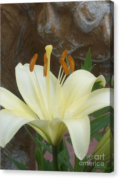 Lily And Rock Canvas Print by Wide Awake Arts