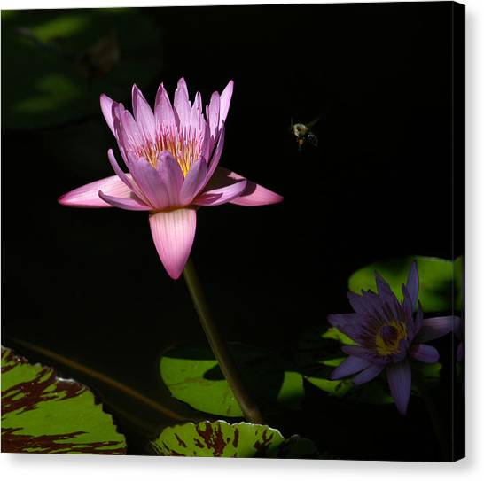 Lily And The Bee Canvas Print
