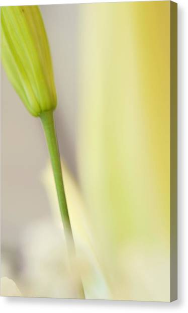 Abstract Lily Canvas Print - Lily Delight. Floral Abstract by Jenny Rainbow