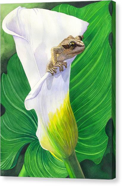 Lily Dipping Canvas Print by Catherine G McElroy