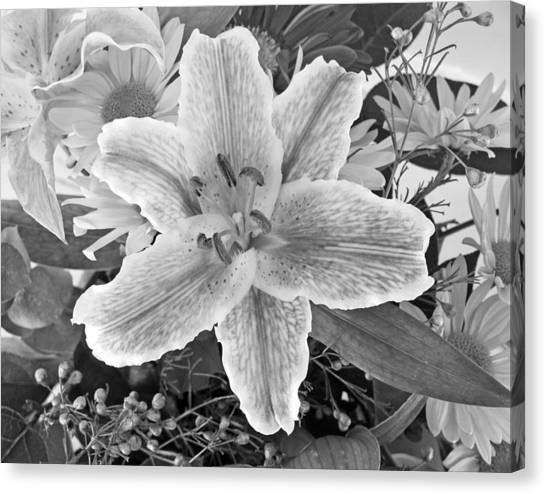 Lily Canvas Print by Frank Winters