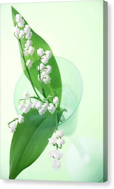 Vase Of Flowers Canvas Print - Lily Of The Valley (convallaria Majalis) by Erika Craddock/science Photo Library