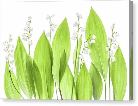 Summer Flowers Canvas Print - Lily Of The Valley by Mandy Disher
