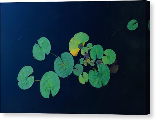 Lily Pad 2 Canvas Print