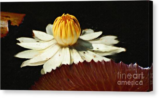 Lily Pad Canvas Print by Diane E Berry