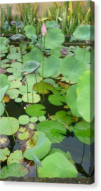 Lily Pad Canvas Print by Jack Edson Adams