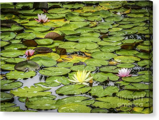 Lily Pads II Canvas Print