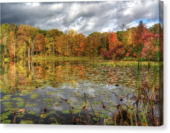 Lily Pads On Foster Pond Canvas Print