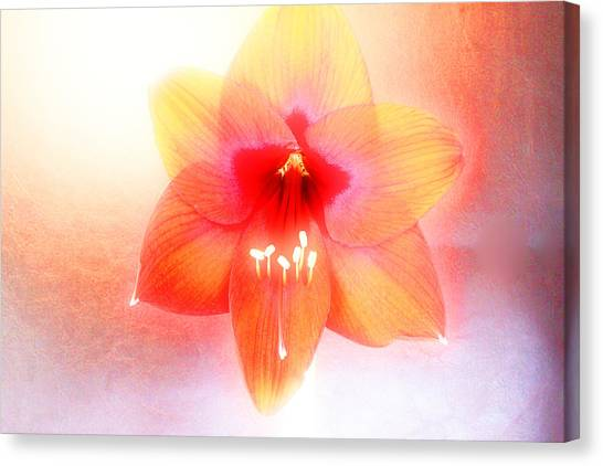 Canvas Print - Lily Party by Russell Wilson