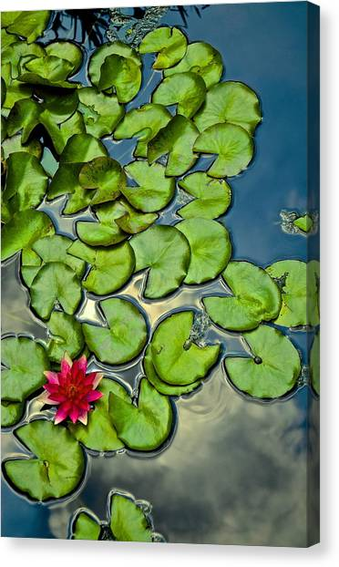 Pacman Lily  Canvas Print by Thomas Camp