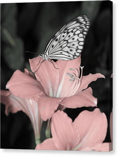 Lily With Butterly  Canvas Print