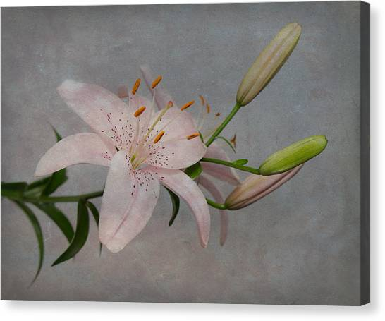 Pink Lily With Texture Canvas Print