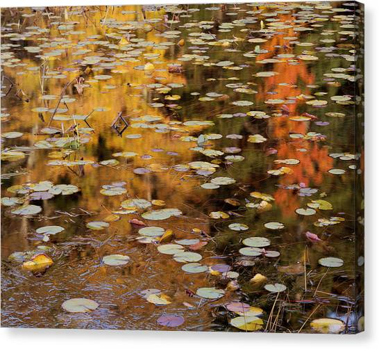 Lilypads And Reflection-h Canvas Print