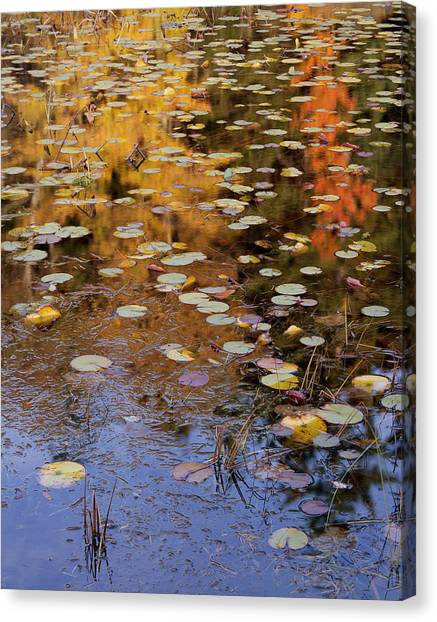 Lilypads And Reflection Canvas Print