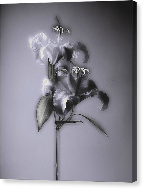 Lily_variation#5 Canvas Print