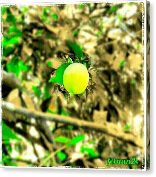 Lemons Canvas Print - #limón #lemon #cítrico #citric #fruta by Fer Nando