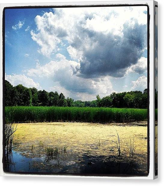 Wetlands Canvas Print - Lincoln Marsh by Dwight Darling