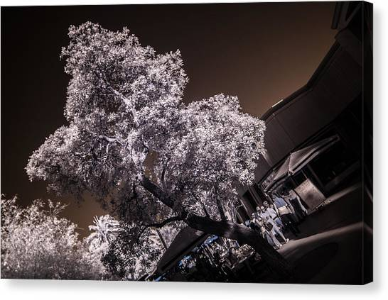 Lincoln Road Tree Canvas Print