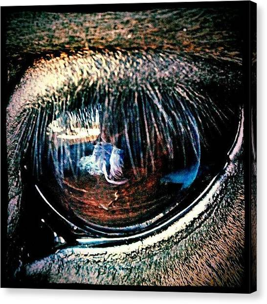 Horse Farms Canvas Print - Lincoln's Lashes by Sarah Watson