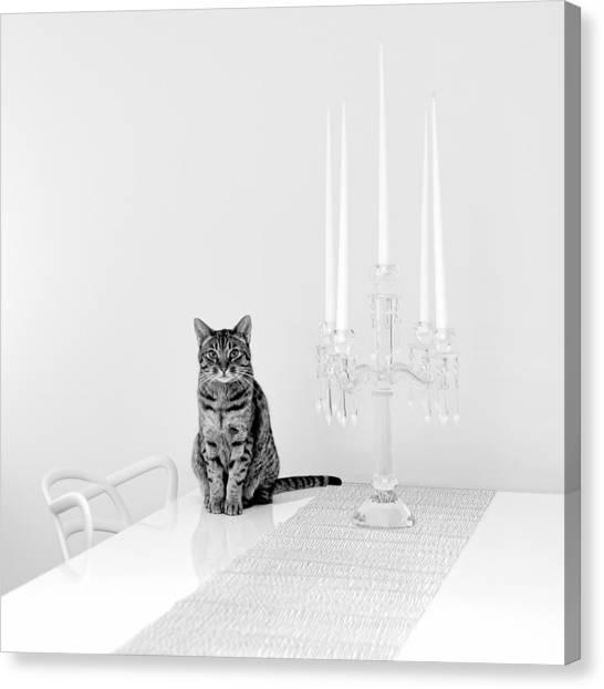 Ocicats Canvas Print - Linda by Ari Salmela