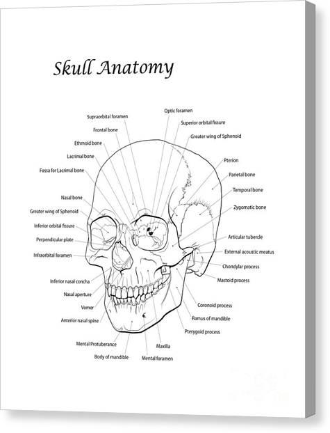 Nasal Aperture Canvas Prints