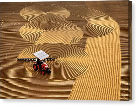 Farms Canvas Print - Lines by Nese Ari