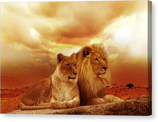 Lion Couple Without Frame Canvas Print