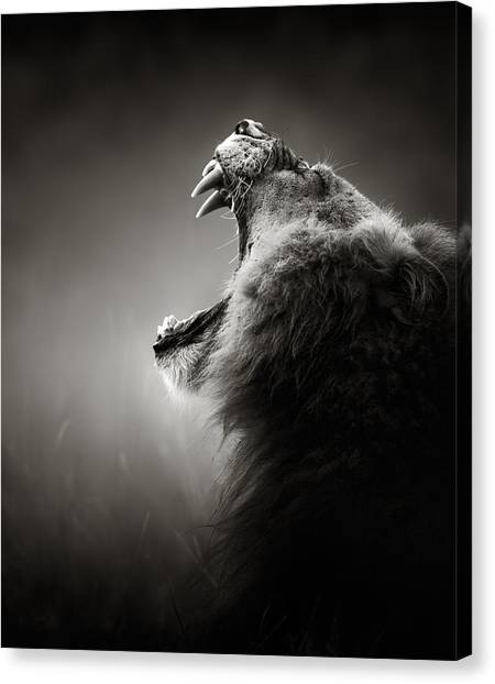 Teeth Canvas Print - Lion Displaying Dangerous Teeth by Johan Swanepoel
