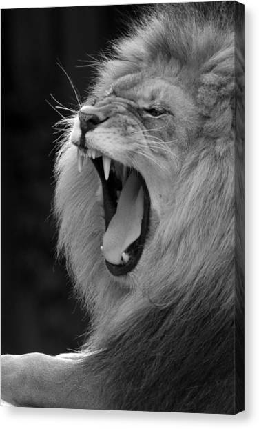 Lion Roar Black And White  Canvas Print