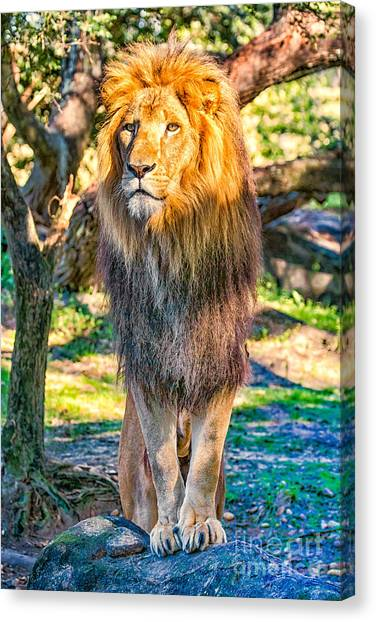 Lion Standing On Rocks Canvas Print