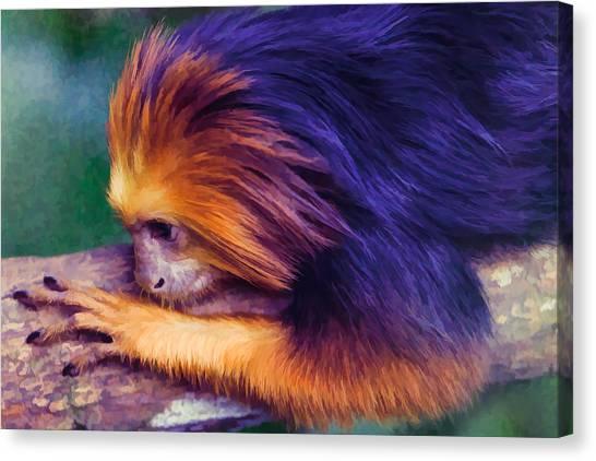 Lion Tamarin Canvas Print