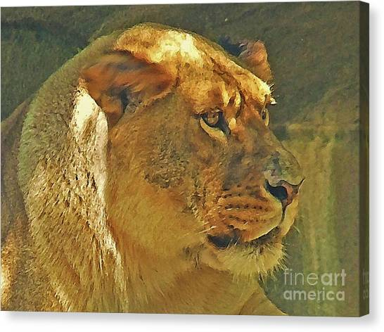 Lioness 2012 Canvas Print