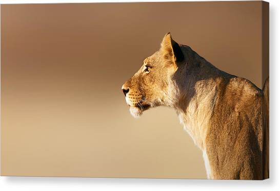 Cat Canvas Print - Lioness Portrait by Johan Swanepoel