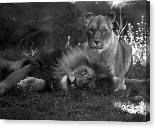 Fine Art India Canvas Print - Lions Me And My Guy by Thomas Woolworth