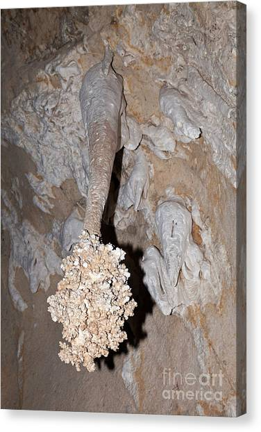 Lions Tail Carlsbad Caverns National Park Canvas Print