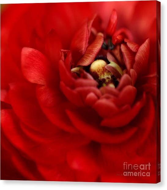 Lip Smackin Canvas Print by Beve Brown-Clark Photography