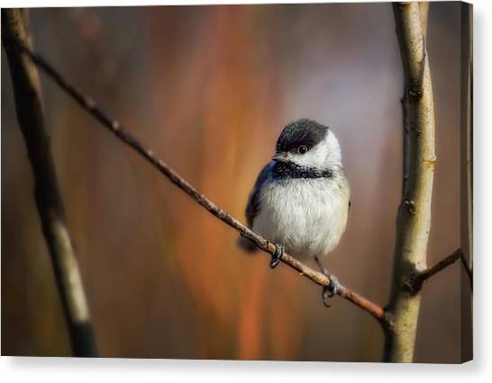 Chickadees Canvas Print - Litlle thing by Christian Duguay