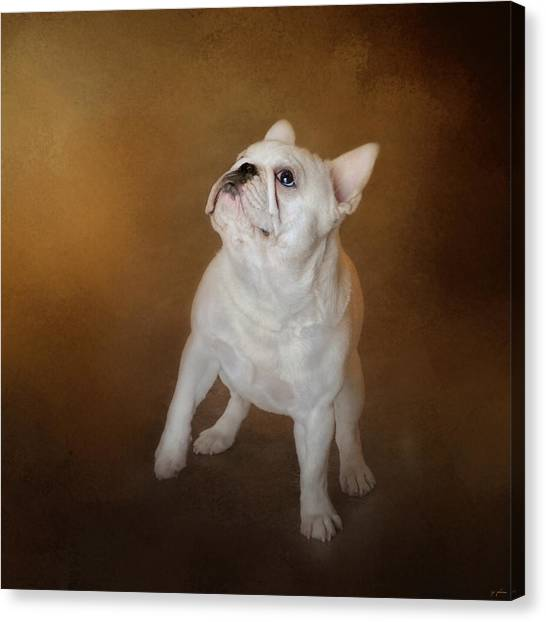 Little Beggar - White French Bulldog Canvas Print