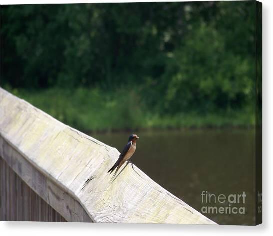 Little Birdie Canvas Print by Kevin Croitz