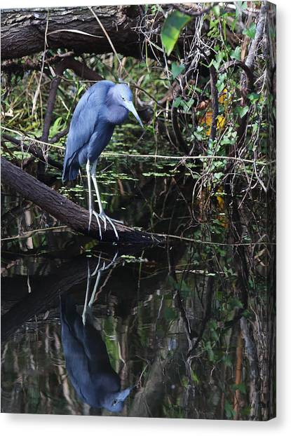 Canvas Print featuring the photograph Little Blue Heron Reflection by Jean Clark