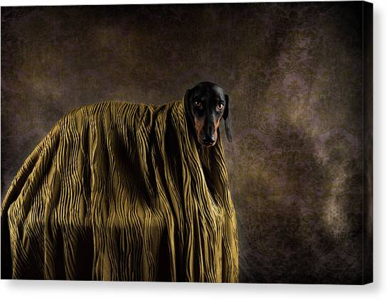 Dachshunds Canvas Print - Little Dandy by Heike Willers