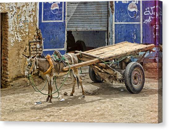 Little Donkey With Cart Canvas Print