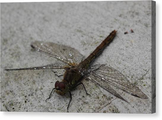 Little Dragonfly Canvas Print